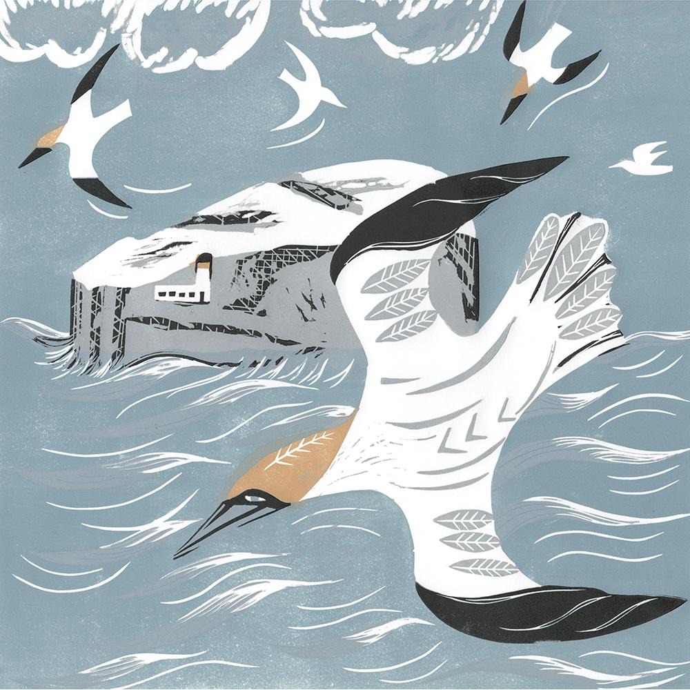 gannets over bass rock